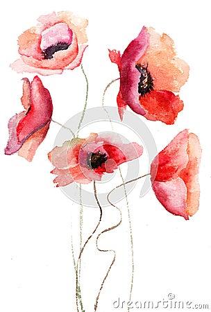 Flores bonitas da papoila