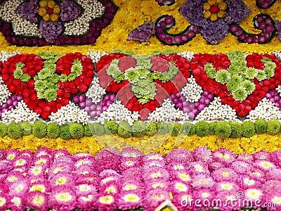 Flores coloridas da flor