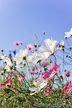 Flores con sonrisa
