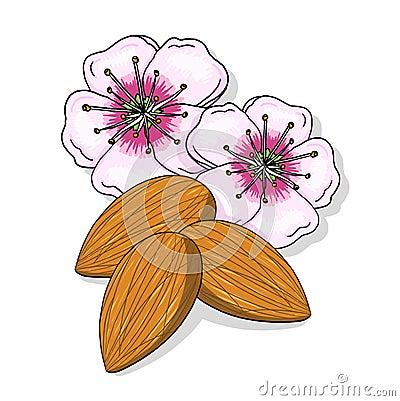 Flores da amêndoa e ilustração nuts