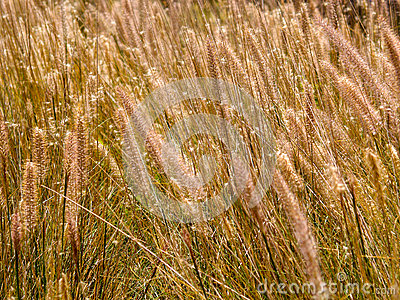 Flores da grama