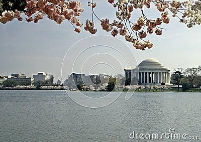 Flores de cereja e memorial de Jefferson