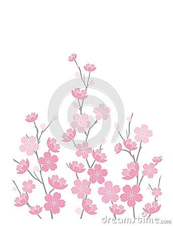 Flores de cereza en blanco