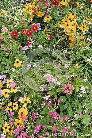 Flores de florescência