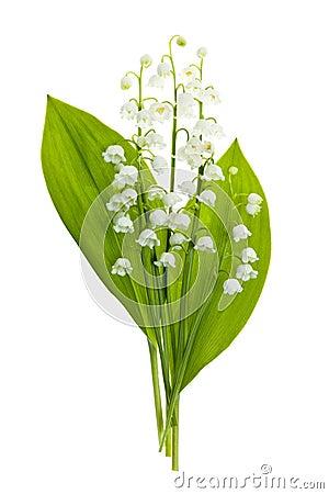 Flores del lirio de los valles en blanco