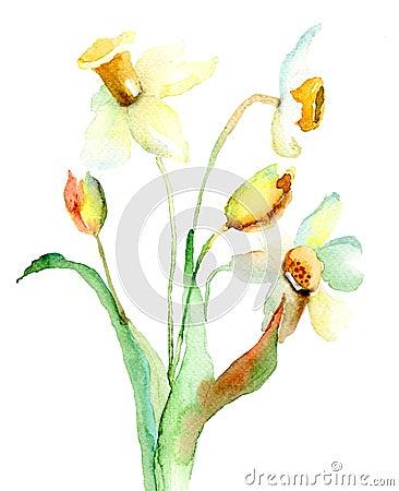 Flores del narciso