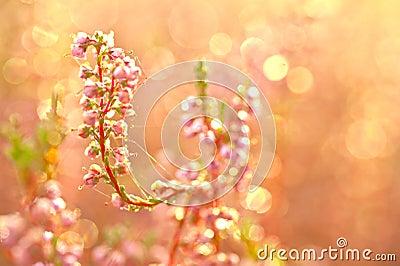 Flores del otoño
