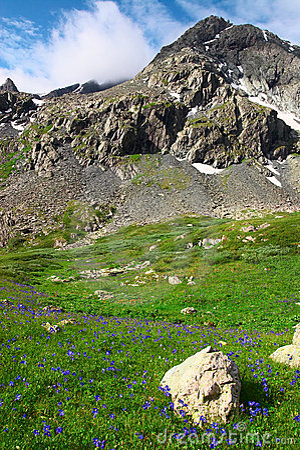 Flores E Montanhas.