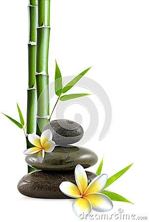 Flores e pedras