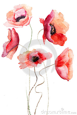 Flores hermosas de la amapola