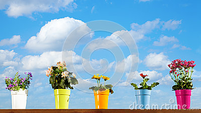 Flores Potted Fotos de Stock Royalty Free - Imagem: 28853558