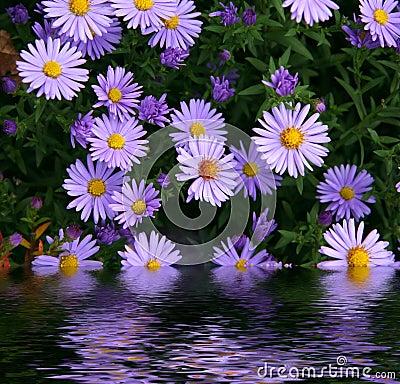 Resultado de imagen para flores en agua
