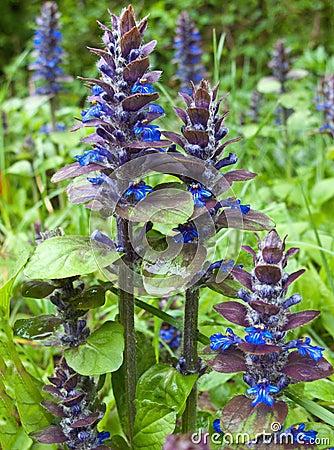 Flores salvajes de la montaña