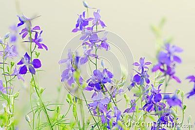 Flores salvajes púrpuras