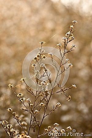 Flores selvagens e fauna