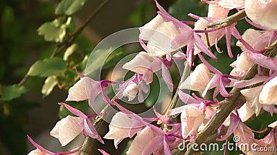 Flores vívidas con aroma natural almacen de video