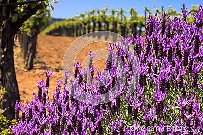 Flores y viñedos