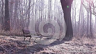 FLORESTA - ÁRVORES, PLANTAS filme