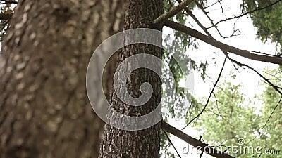 FLORESTA - ÁRVORES, PLANTAS video estoque