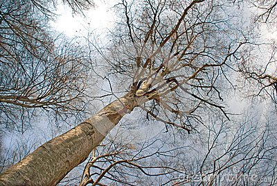 Floresta adiantada da mola