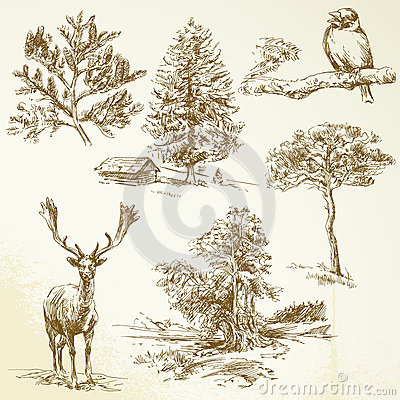 Floresta, animais, natureza