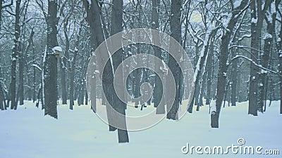 Floresta congelada filme