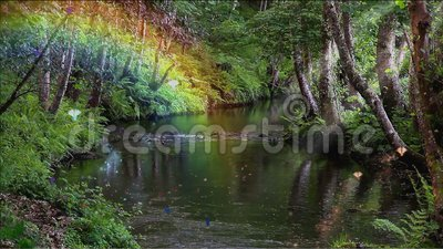 Floresta encantado e riacho
