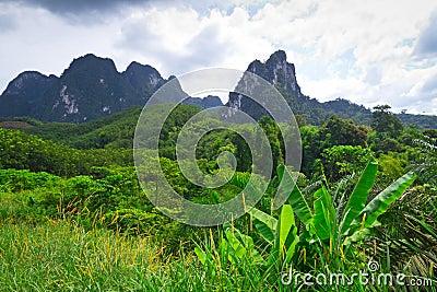 Floresta húmida do parque nacional de Khao Sok