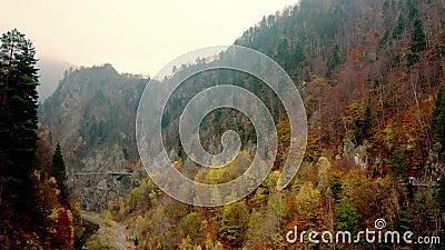 Floresta nas Montanhas Cárpticas video estoque
