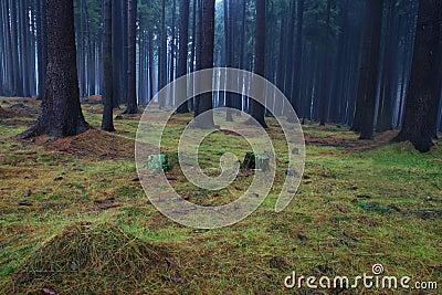 Floresta obscura