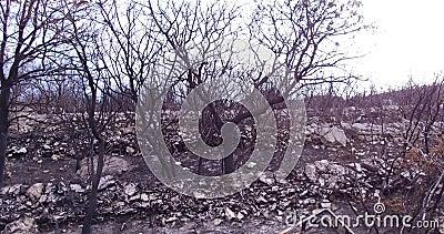 Floresta queimada para baixo por um incêndio florestal video estoque