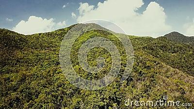 Floresta tropical na ilha Opini?o fant?stica do zang?o da selva verde no cume da montanha de surpreender a ilha tropical exotic B vídeos de arquivo