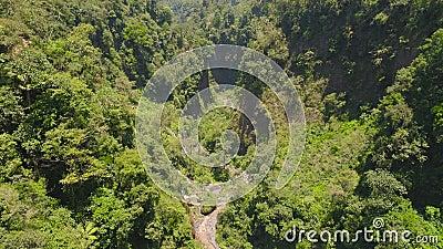 Florestas tropicais e cascata vídeos de arquivo