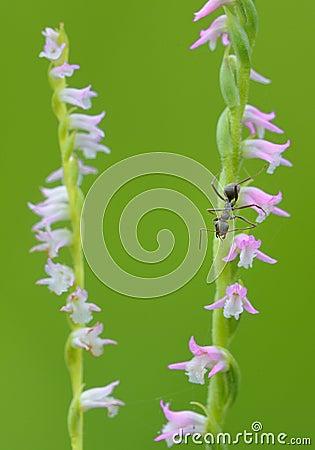 On floret s ant
