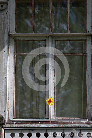 Floret on the Window
