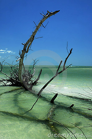 Florida Beach Scenic 3