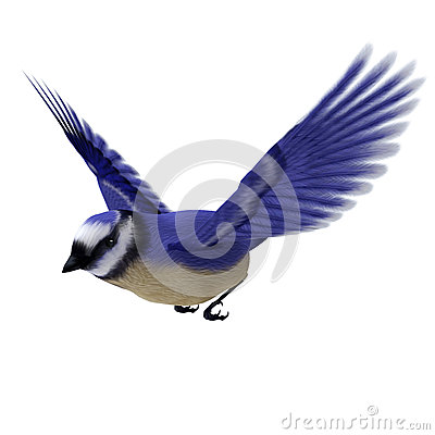 Free Florida Jay Bird Royalty Free Stock Images - 34391529