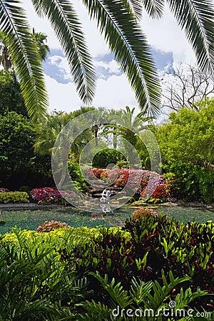 Florida Palm Garden