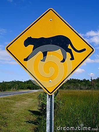 Florida Panther Crossing