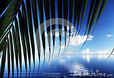 Florida Reflections