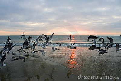 Florida wschód słońca