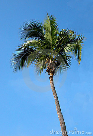 Free Floride Palm Stock Images - 82504