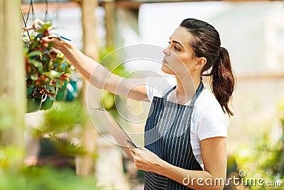 Florist checking flowers