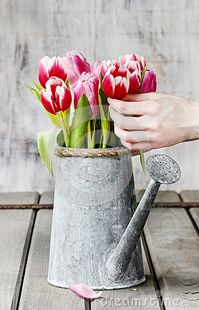 Free Florist Workspace: Woman Arranging Bouquet Of Tulips Stock Images - 38334894
