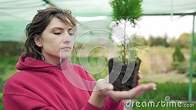Florysta kontroluje roślinę Kontrola i weryfikacja sadzonek Biolog bada korzenie wiecznie zielonych sadzonek zdjęcie wideo