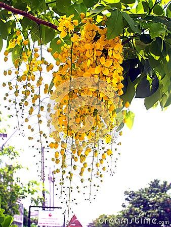 Flower 126