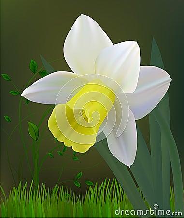 Free Flower Royalty Free Stock Photos - 14307258