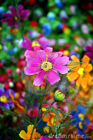 Free Flower Stock Photography - 3053542
