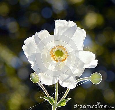 Free Flower Royalty Free Stock Photo - 42775715