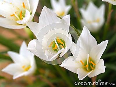 Flower 91
